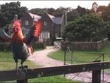 JW Rooster II