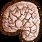 Substances Drowners brain.png