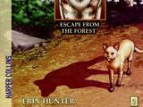 Escape from the Forest