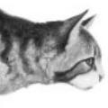 Kimalaisraita