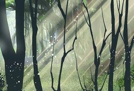 Star Dou Forest.jpg