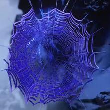 Spider Web Restraint.png