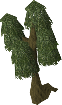 Willow tree old.png