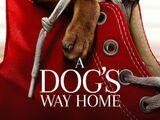 A Dog's Way Home (2019)