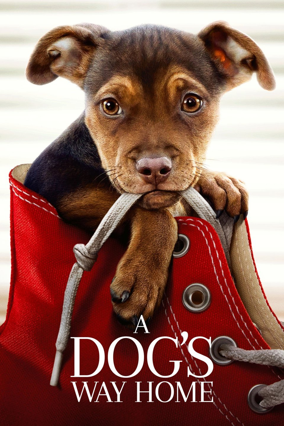 A Dog's Way Home (2019)
