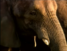 Flik's musical adventure Elephant Single Clas AT043801