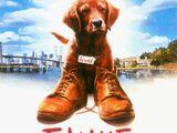 Fluke (1995)