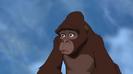 Tarzan Baby Whining Short Cr PE144101