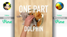 Best Disney and Pixar Vines of 2016 Hollywoodedge, Dolphin Chirps Vocal PE024601