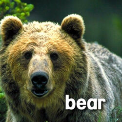 Sound Ideas, BEAR - LARGE BLACK BEAR: SINGLE ROAR, ANIMAL 02
