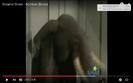 Additon Hollywoodedge, Elephant Single Clas AT043701
