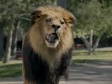 Xfinity On Demand - Zookeeper (2015)