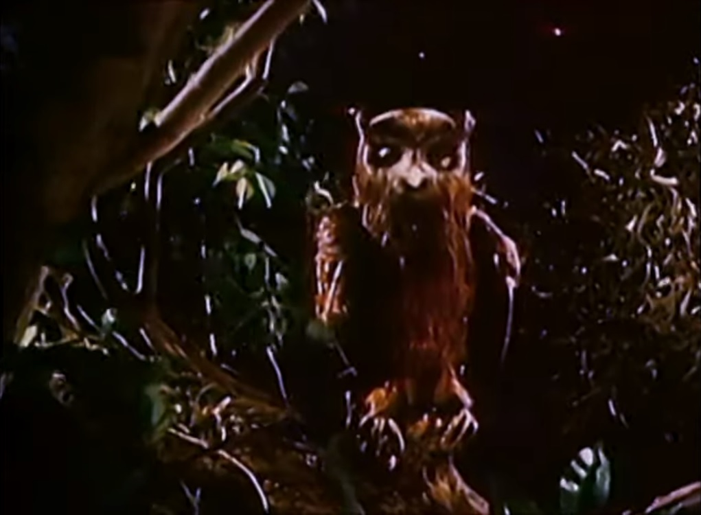 Valentino Owl Hoots & Clucks