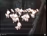 101 Dalmatians 1997 Trailer Sound Ideas, DOG - PUPPY, YELP, WHINE AND BARK, ANIMAL