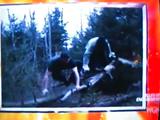 Hollywoodedge, Grunt 11 Male Straine PE133101