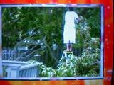 Hollywoodedge, Tree Cracks Splinter PE108201