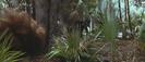 Forrest Gump (1994) SKYWALKER ROARING HORSE WHINNY