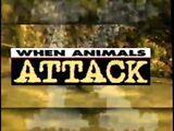 When Animals Attack (1996)