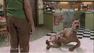 Scoobydoogross05