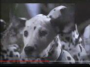 101 Dalmatians 1996 TV Spot Hollywoodedge, Twangy Boings 7 Type CRT015901-1