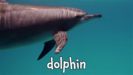 Wild Animal Sounds Learning Zoo Animal Sounds for Kids Hollywoodedge, Dolphin Chirps Vocal PE024601