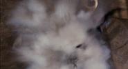 FILM COUNTS - James Bond Kill Count 11-37 screenshot