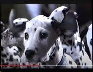 101 Dalmatians 1997 VHS Trailer Hollywoodedge, Twangy Boings 7 Type CRT015901-1