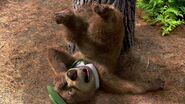 Yogi Bear 2010 Screenshot 0564