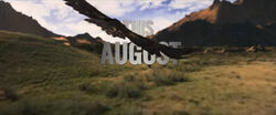 Alpha Trailer Hollywoodedge, Bird Hawk Single Scre PE020801.jpg