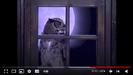 Henry's Amazing Animals Animal Neighbors Hollywoodedge, Owl Great Horned Hoot AT083001 Option 2