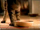 Got Milk Commercial Yum Yum Time Hollywoodedge, Cats Two Angry YowlsD PE022601