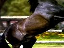 Animal Alphabet Song Valentino Horse Whinnying (Three Winnies)