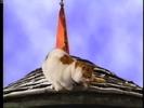Sound Ideas, CAT - DOMESTIC SINGLE MEOW, ANIMAL 02 Barney's Adventure Bus