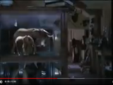 Sound Ideas, ELEPHANT - SEVERAL ELEPHANTS TRUMPETING, ANIMAL