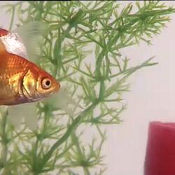 Hollywoodedge, Bubbles Fish Tank Bub PE052501