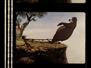 The Jungle Book (1967) 1990 Theatrical Reissue Trailer Sound Ideas, ZIP, CARTOON - BIG WHISTLE ZING OUT