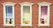 The Secret Life of Pets Trailer Hollywoodedge, Wood Door OCKnob Ratt PE180201 6