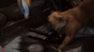 The Smurfs (2011) Hollywoodedge, Thin Metallic Pot Or CRT031202