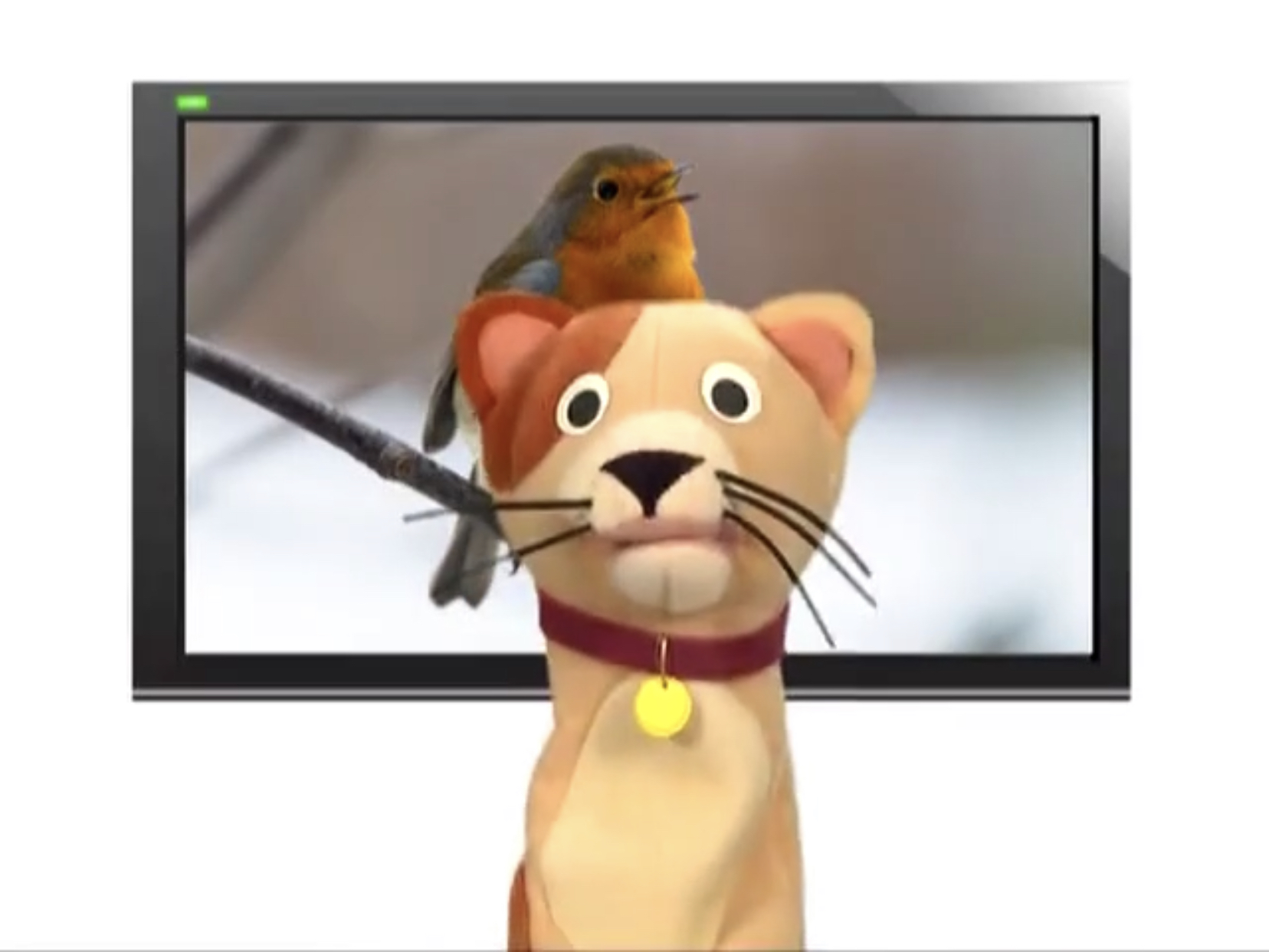 Sound Ideas, BIRD, BLUEBIRD - BLUEBIRDS CHIRPING, ANIMAL