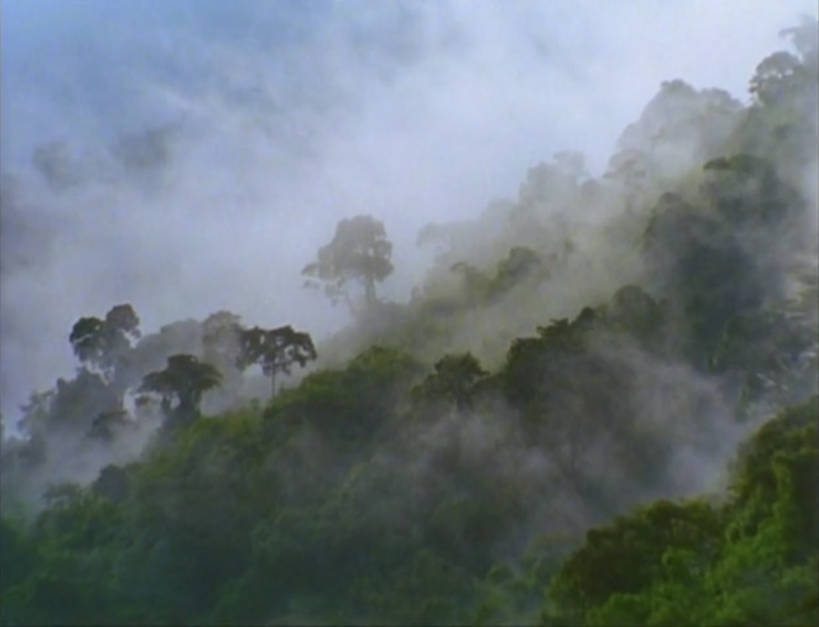 Sound Ideas, JUNGLE, SOUTH AMERICA - SOUTH AMERICA: MORNING AMBIENCE, BIRDS, INSECTS