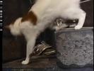 Barney's Adventure Bus Sound Ideas, CAT - DOMESTIC SINGLE MEOW, ANIMAL 04