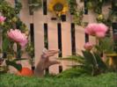 Oobi - Garden Day! 00-00-53