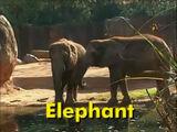 Sound Ideas, ELEPHANT - CALLING, BIRDS IN B/G, ANIMAL