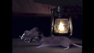 Henry's Amazing Animals Animal Neighbors Sound Ideas, RAT - RAT SQUEAKS, ANIMAL, RODENT