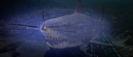 Jaws 3-D (1983) WB GLASS BREAK 01