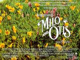 The Adventures of Milo and Otis (1989)
