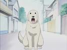 Azumanga Daioh Ep 7 Hollywoodedge, Dog Golden Lab Bark AT021501-2