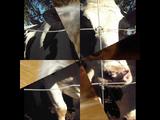 Sound Ideas, COW - SINGLE MOO, ANIMAL 03