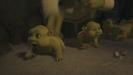 Shrek the Third Hollywoodedge, Baby Vocals Playful PE145101 (2nd half) (3)