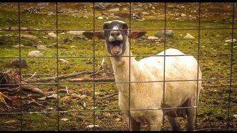 The_Screaming_Sheep_(Original_Upload)-1